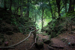 woodland-walk-Puzzlewood