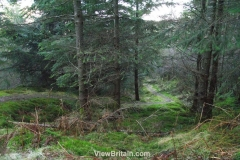 Garbeg-Hill-Loch-Ard-Forest-2