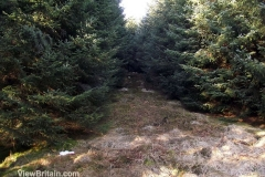 Path-Leading-to-Deep-Pine-Forest-Aberfoyle-Scotland