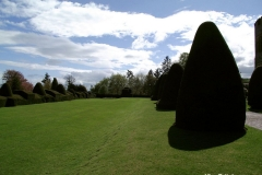 Clipped-Yew-Trees-at-Chirk-Castle-Wales
