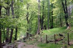 Walk-leading-to-Pistyll-Rhaeadr-waterfall-Wales