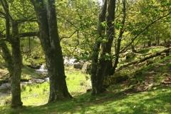 top-of-pistyll-rhaeadr-waterfall