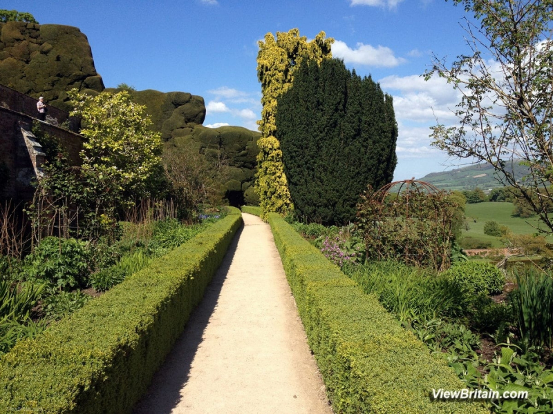 Magnificent-Yew-Trees-Powis-Castle