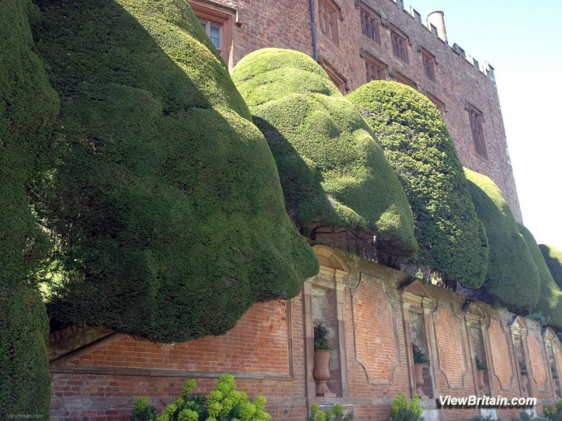 Nicely-Clipped-Yew-Trees-in-Powis-Castle