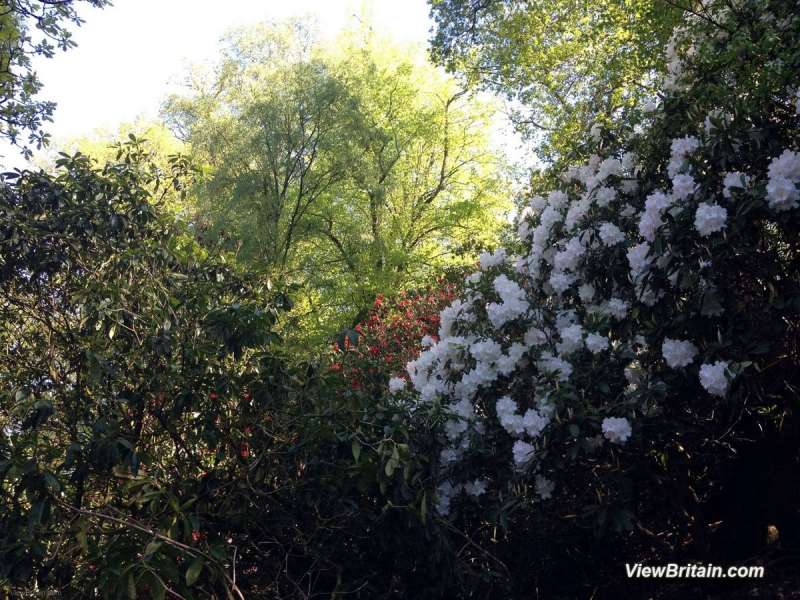 Rare-plants-and-trees-in-Powis-Castle-grounds