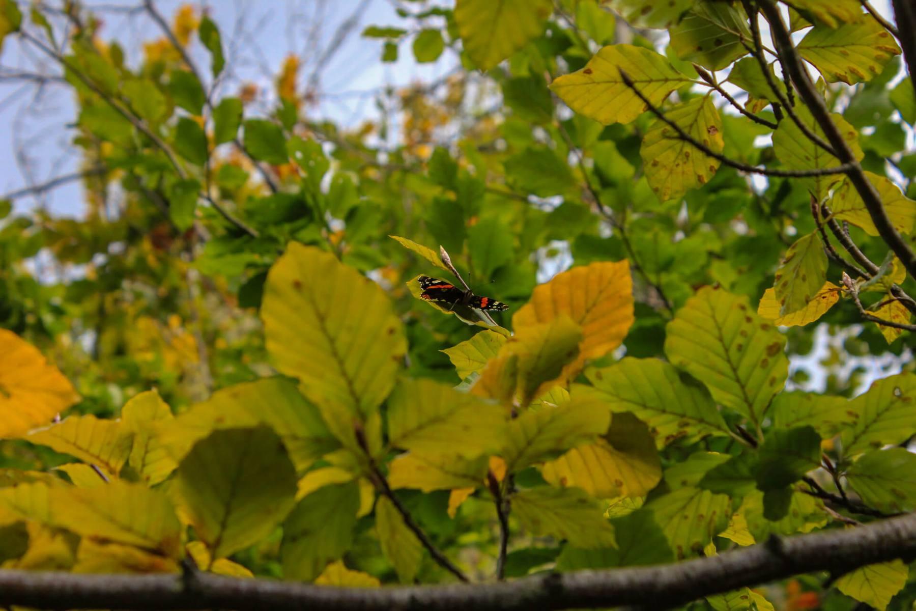 butterfly-closeup-symonds-yat-walk
