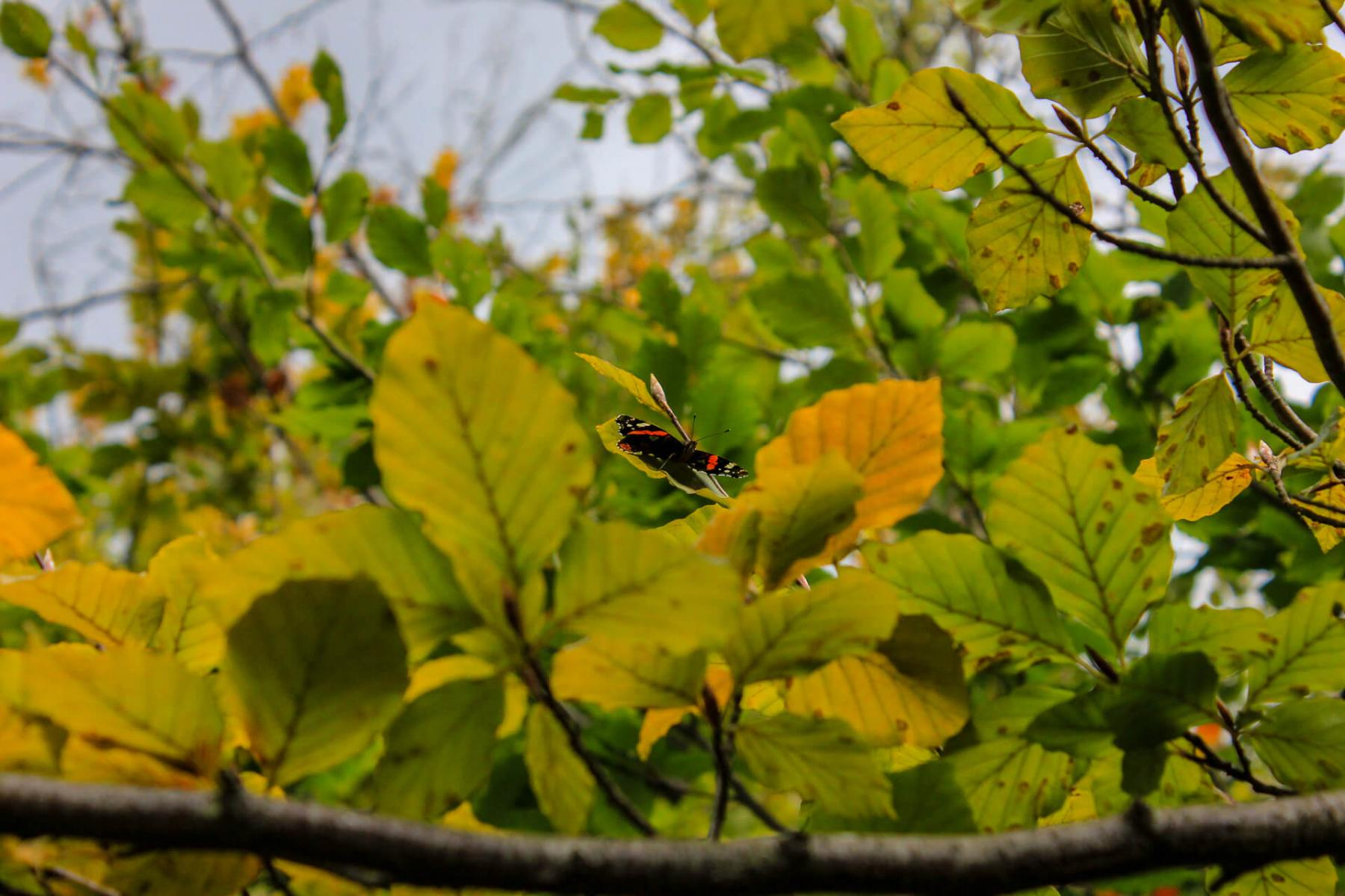 butterfly-upcolse-walk-near-symonds-yat-wye-valley