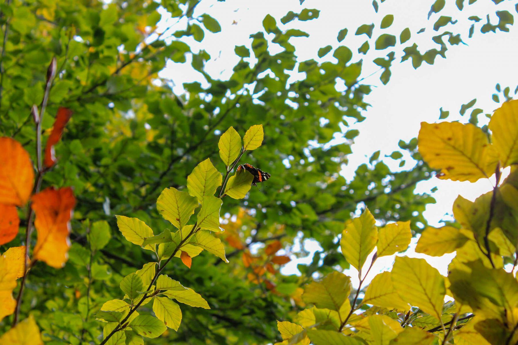 butterlfy-spotting-symonds-yat-trail-1