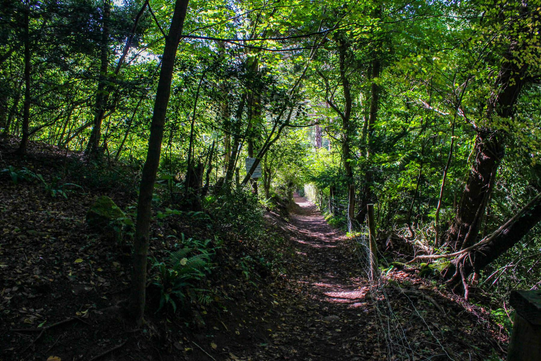 climb-up-to-yat-rock-from-symonds-yat-east-riverside