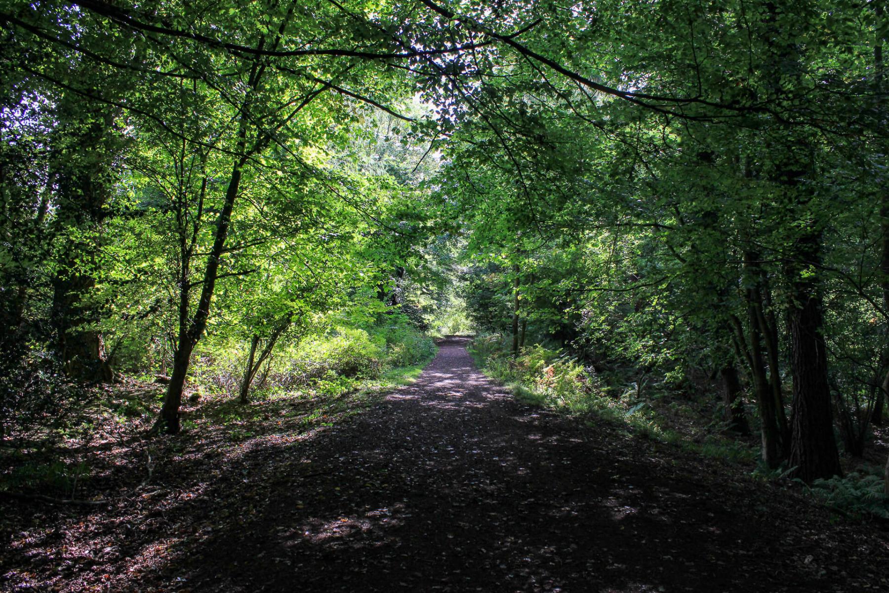 symonds-yat-trail-walk-path-1