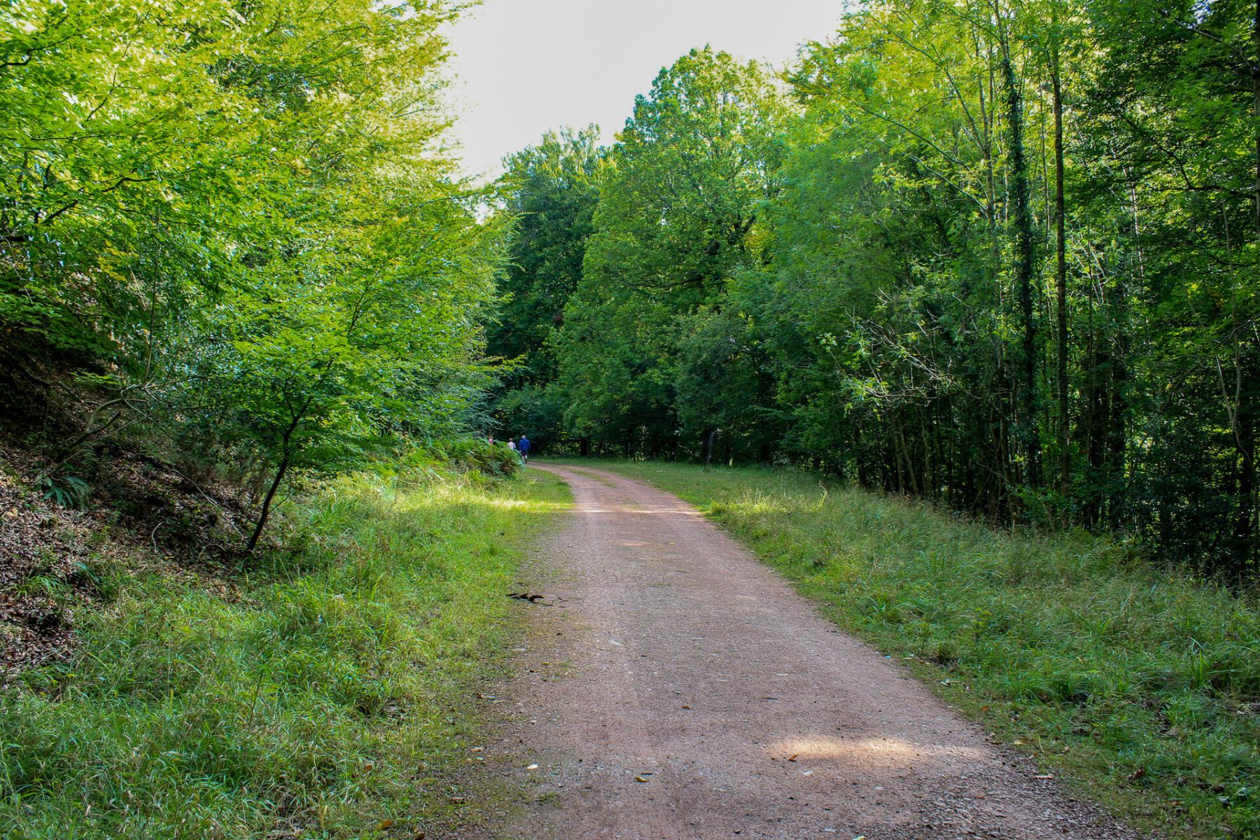 walk-back-to-symonds-yat-car-park-wye-valley