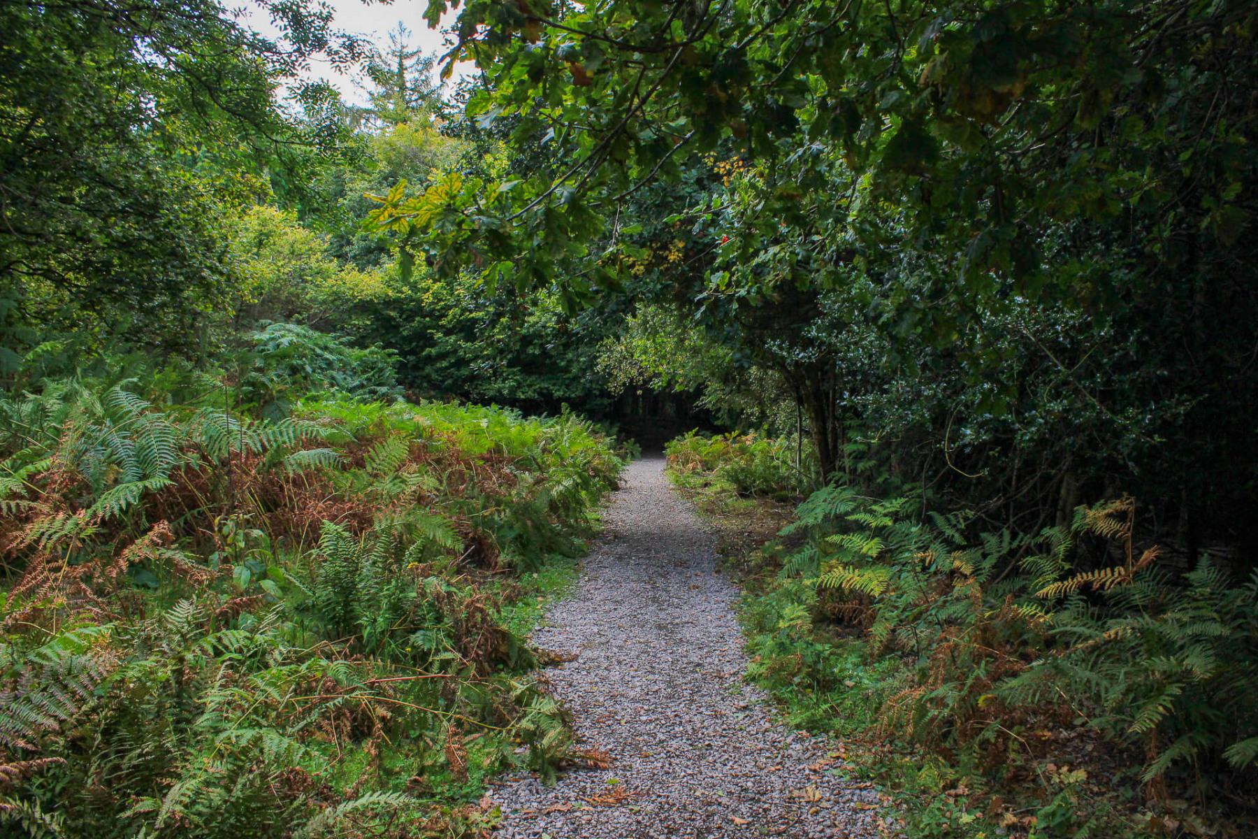 walk-near-symonds-yat-wye-valley-2