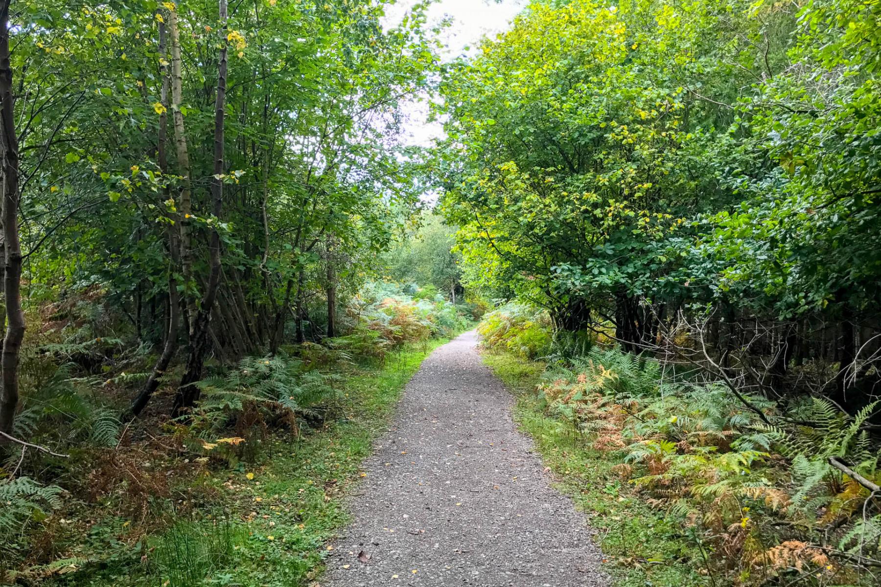 walk-near-symonds-yat-wye-valley