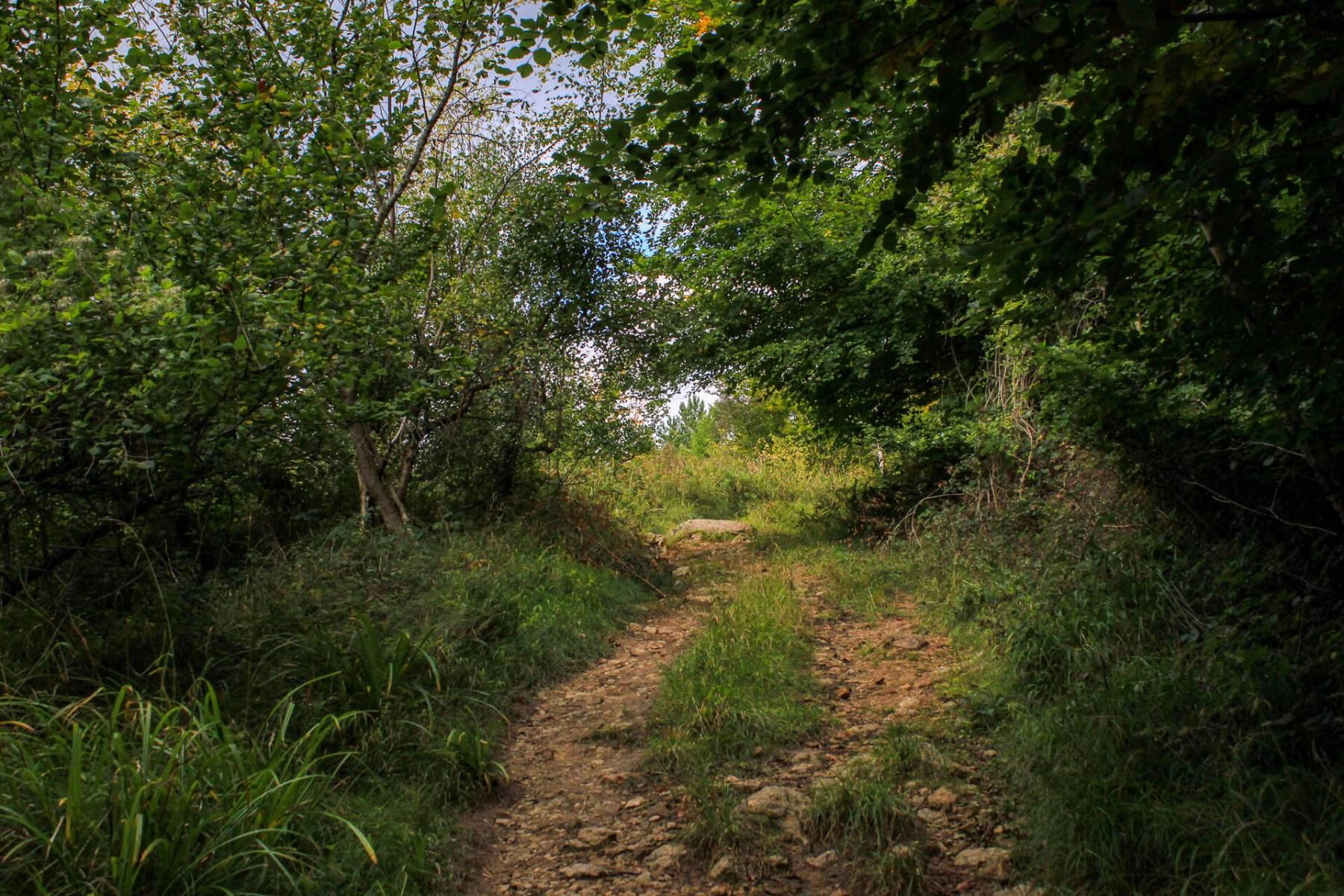 walk-near-yat-rock-wye-valley-1