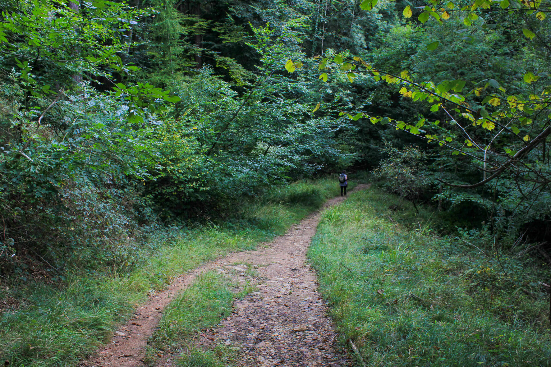 walk-near-yat-rock-wye-valley-2