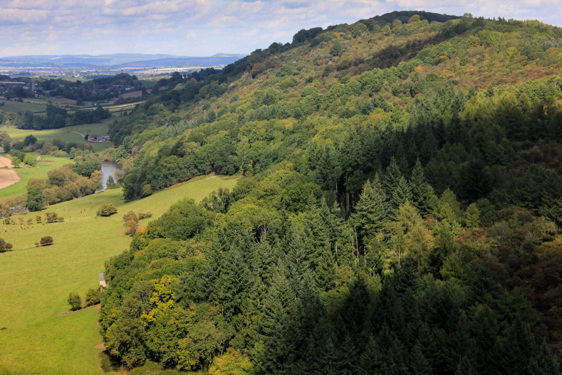 woodlands-where-peregrine-falcons-are-spotted-wye-valley