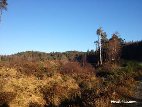 Aberfoyle – Details of the Loch Ard Forest walk