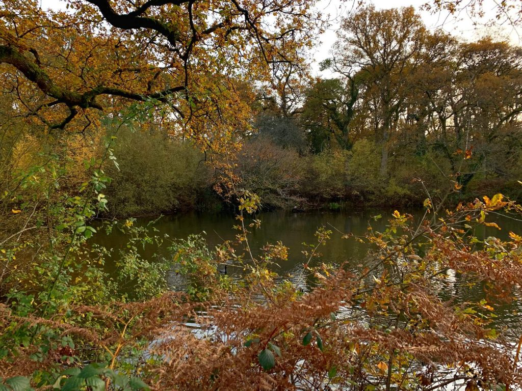 Lower-hollows-pond-bookham-commons