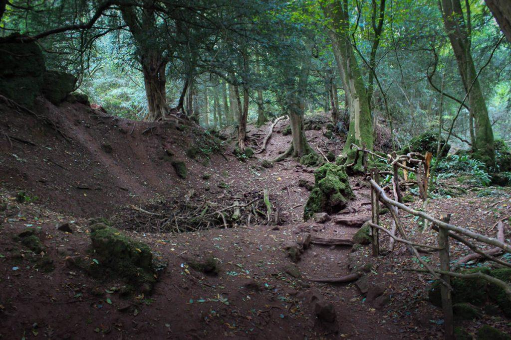 Puzzlewood-winding-walking-paths