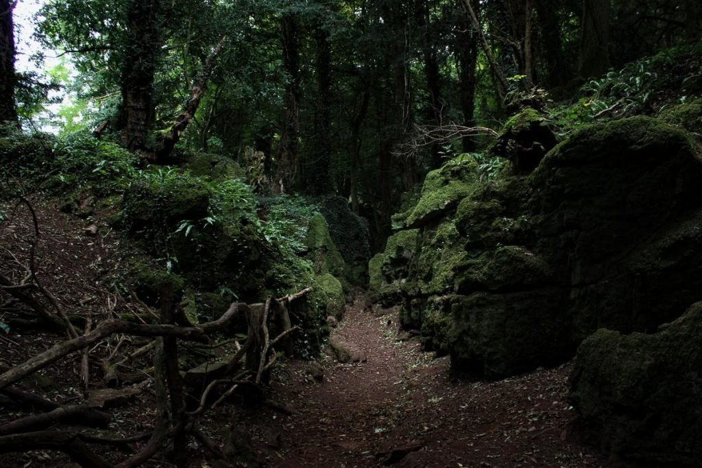 Puzzlewood-sun-ray-through-dense-forest