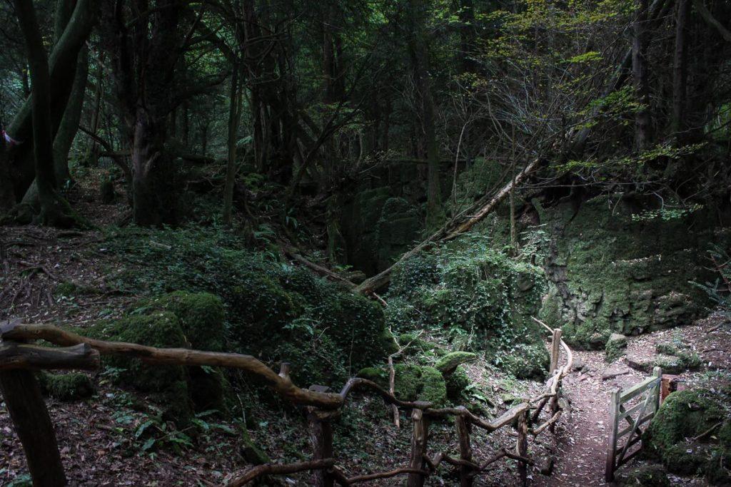 Puzzlewood-wild-untamed-paths