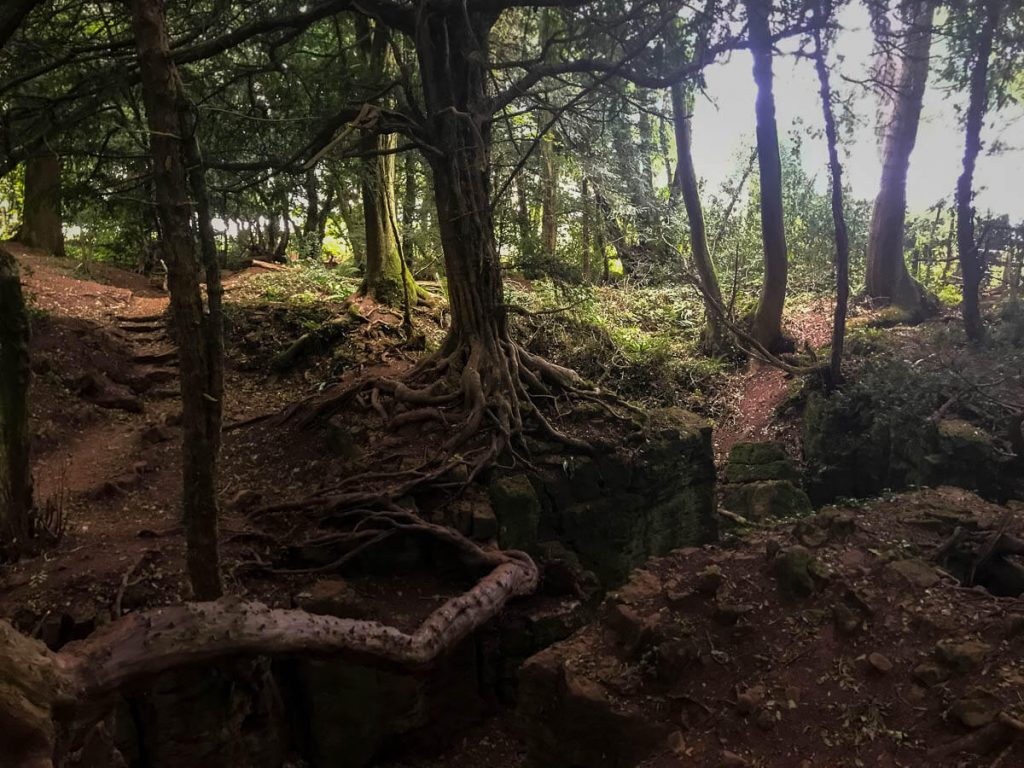 mysterious-gnarled-and-twisted-tree-roots-puzzlewood
