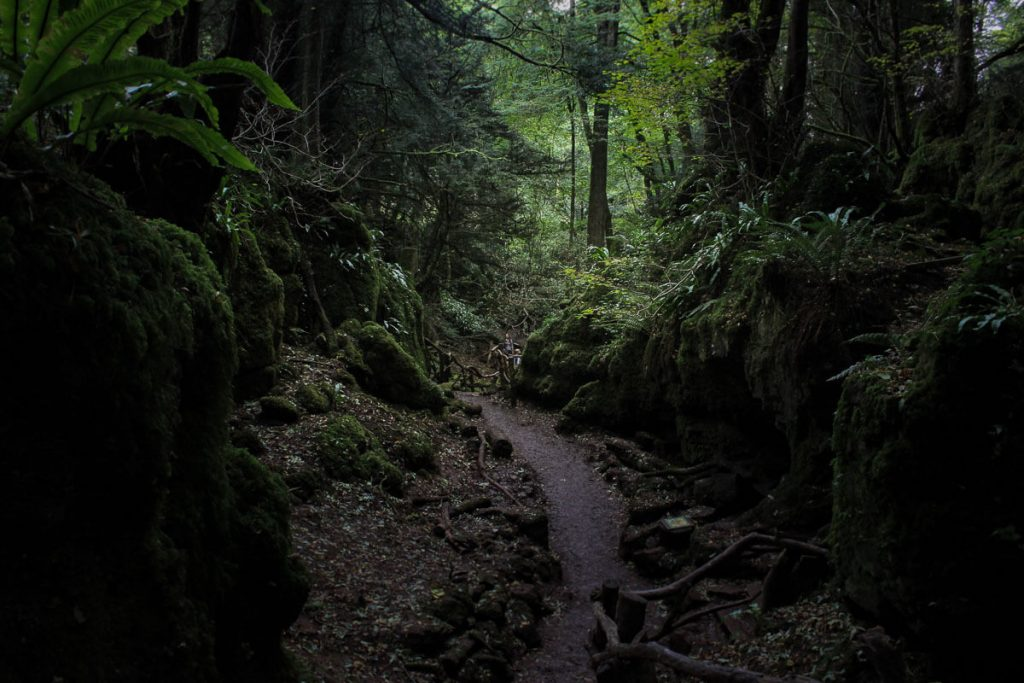 mysterious-paths-puzzlewood-forest-of-dean2