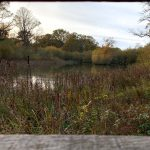 Bookham Commons – Surrey – Things to see, Pictures and Videos