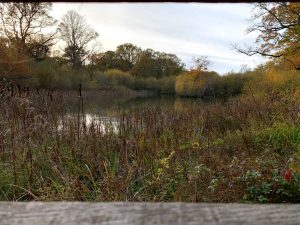 Read more about the article Bookham Commons – Surrey – Things to see, Pictures and Videos