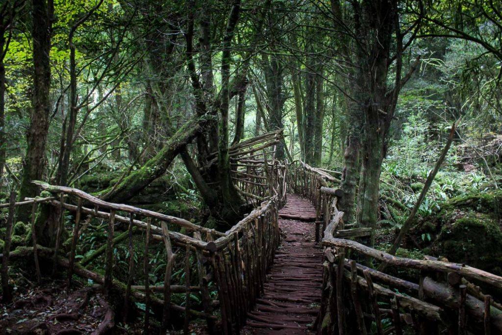 wooden-bridge-puzzlewood-forest-of-dean