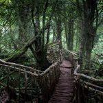 Things to See and Do in Puzzlewood – Forest of Dean