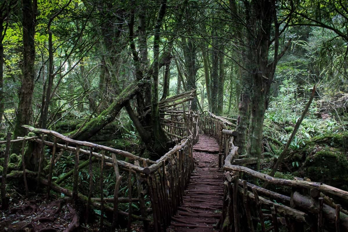 Read more about the article Things to See and Do in Puzzlewood – Forest of Dean